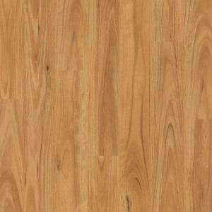 Eligna Blackbutt